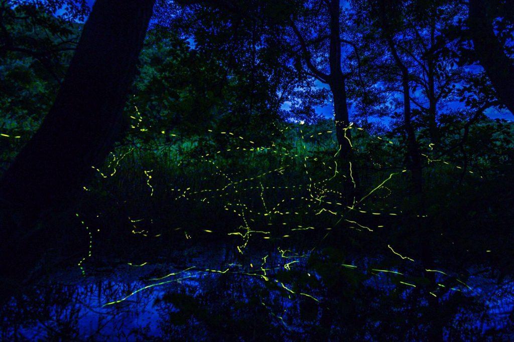 夜の森の中