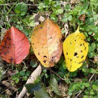 秋の足音が・・・
