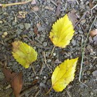 紅葉の森歩き&森deヨガツアー